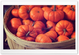 Basket Full Of Pumpkins HD Wide Wallpaper for 4K UHD Widescreen desktop & smartphone