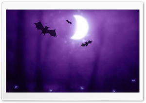 Bats   Halloween HD Wide Wallpaper for 4K UHD Widescreen desktop & smartphone