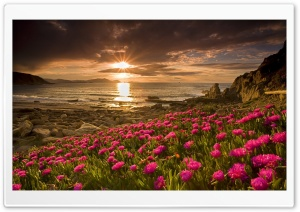 Beach Flowers HD Wide Wallpaper for Widescreen