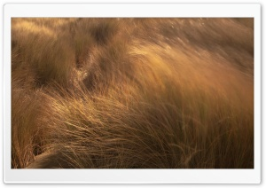 Beach Grass, Wind HD Wide Wallpaper for 4K UHD Widescreen desktop & smartphone