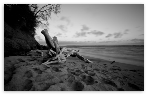 Download beach in black and white hd wallpaper