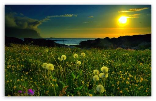 Download Beach Meadow UltraHD Wallpaper