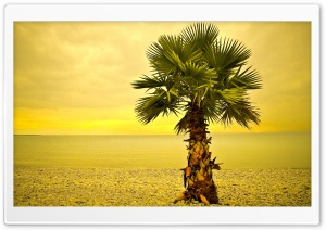 Beach Palm Tree HD Wide Wallpaper for Widescreen