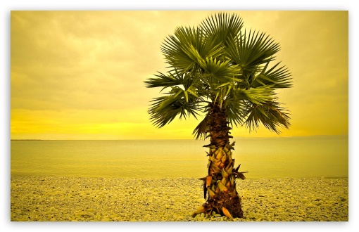 Beach Palm Tree ❤ 4K UHD Wallpaper for Wide 16:10 5:3 Widescreen WHXGA WQXGA WUXGA WXGA WGA ; 4K UHD 16:9 Ultra High Definition 2160p 1440p 1080p 900p 720p ; Standard 4:3 5:4 3:2 Fullscreen UXGA XGA SVGA QSXGA SXGA DVGA HVGA HQVGA ( Apple PowerBook G4 iPhone 4 3G 3GS iPod Touch ) ; Tablet 1:1 ; iPad 1/2/Mini ; Mobile 4:3 5:3 3:2 16:9 5:4 - UXGA XGA SVGA WGA DVGA HVGA HQVGA ( Apple PowerBook G4 iPhone 4 3G 3GS iPod Touch ) 2160p 1440p 1080p 900p 720p QSXGA SXGA ;