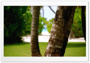 Beach Tree Trunk HD Wide Wallpaper for Widescreen