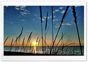 Beachgrass HD Wide Wallpaper for Widescreen