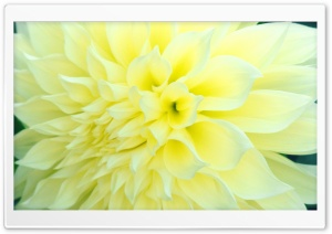 Beaming Flower HD Wide Wallpaper for Widescreen