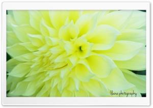 Beaming Flower 2
