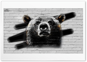 Bear - Concrete Wall HD Wide Wallpaper for Widescreen