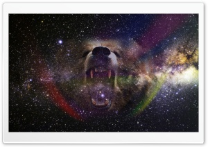 Bear Into the Space HD Wide Wallpaper for 4K UHD Widescreen desktop & smartphone