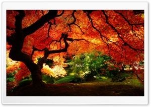 Beautiful Autumn HD Wide Wallpaper for Widescreen