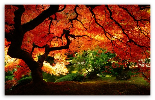 Beautiful Autumn HD wallpaper for Wide 16:10 5:3 Widescreen WHXGA WQXGA WUXGA WXGA WGA ; HD 16:9 High Definition WQHD QWXGA 1080p 900p 720p QHD nHD ; Standard 4:3 5:4 3:2 Fullscreen UXGA XGA SVGA QSXGA SXGA DVGA HVGA HQVGA devices ( Apple PowerBook G4 iPhone 4 3G 3GS iPod Touch ) ; Tablet 1:1 ; iPad 1/2/Mini ; Mobile 4:3 5:3 3:2 16:9 5:4 - UXGA XGA SVGA WGA DVGA HVGA HQVGA devices ( Apple PowerBook G4 iPhone 4 3G 3GS iPod Touch ) WQHD QWXGA 1080p 900p 720p QHD nHD QSXGA SXGA ; Dual 16:10 5:3 16:9 4:3 5:4 WHXGA WQXGA WUXGA WXGA WGA WQHD QWXGA 1080p 900p 720p QHD nHD UXGA XGA SVGA QSXGA SXGA ;