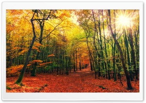 Beautiful Autumn Colors Forest Path, Sunny Day HD Wide Wallpaper for 4K UHD Widescreen desktop & smartphone