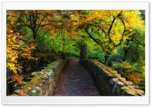 Beautiful Autumn Cover Photo