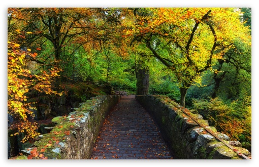 Beautiful Autumn Cover Photo HD wallpaper for Wide 16:10 5:3 Widescreen WHXGA WQXGA WUXGA WXGA WGA ; UltraWide 21:9 24:10 ; HD 16:9 High Definition WQHD QWXGA 1080p 900p 720p QHD nHD ; UHD 16:9 WQHD QWXGA 1080p 900p 720p QHD nHD ; Standard 4:3 5:4 3:2 Fullscreen UXGA XGA SVGA QSXGA SXGA DVGA HVGA HQVGA devices ( Apple PowerBook G4 iPhone 4 3G 3GS iPod Touch ) ; Smartphone 16:9 3:2 5:3 WQHD QWXGA 1080p 900p 720p QHD nHD DVGA HVGA HQVGA devices ( Apple PowerBook G4 iPhone 4 3G 3GS iPod Touch ) WGA ; Tablet 1:1 ; iPad 1/2/Mini ; Mobile 4:3 5:3 3:2 16:9 5:4 - UXGA XGA SVGA WGA DVGA HVGA HQVGA devices ( Apple PowerBook G4 iPhone 4 3G 3GS iPod Touch ) WQHD QWXGA 1080p 900p 720p QHD nHD QSXGA SXGA ; Dual 16:10 5:3 4:3 5:4 3:2 WHXGA WQXGA WUXGA WXGA WGA UXGA XGA SVGA QSXGA SXGA DVGA HVGA HQVGA devices ( Apple PowerBook G4 iPhone 4 3G 3GS iPod Touch ) ;