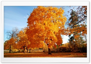 Beautiful Autumn Day HD Wide Wallpaper for Widescreen