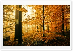 Beautiful Autumn Foliage HD Wide Wallpaper for Widescreen