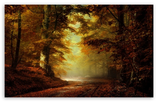 Beautiful Autumn Landscape 4 HD wallpaper for Wide 16:10 5:3 Widescreen WHXGA WQXGA WUXGA WXGA WGA ; HD 16:9 High Definition WQHD QWXGA 1080p 900p 720p QHD nHD ; Standard 4:3 5:4 3:2 Fullscreen UXGA XGA SVGA QSXGA SXGA DVGA HVGA HQVGA devices ( Apple PowerBook G4 iPhone 4 3G 3GS iPod Touch ) ; Tablet 1:1 ; iPad 1/2/Mini ; Mobile 4:3 5:3 3:2 16:9 5:4 - UXGA XGA SVGA WGA DVGA HVGA HQVGA devices ( Apple PowerBook G4 iPhone 4 3G 3GS iPod Touch ) WQHD QWXGA 1080p 900p 720p QHD nHD QSXGA SXGA ;