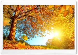 Beautiful Autumn Landscape HD Wide Wallpaper for Widescreen