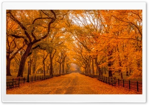Beautiful Autumn Landscapes of the World HD Wide Wallpaper for Widescreen