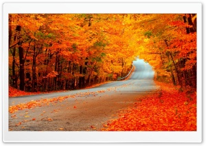 Beautiful Autumn Orange Trees, Road HD Wide Wallpaper for 4K UHD Widescreen desktop & smartphone