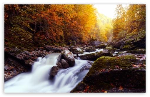 Beautiful Autumn Scenery, Gorges de la Jogne, Switzerland UltraHD Wallpaper for Wide 16:10 5:3 Widescreen WHXGA WQXGA WUXGA WXGA WGA ; UltraWide 21:9 24:10 ; 8K UHD TV 16:9 Ultra High Definition 2160p 1440p 1080p 900p 720p ; UHD 16:9 2160p 1440p 1080p 900p 720p ; Standard 4:3 5:4 3:2 Fullscreen UXGA XGA SVGA QSXGA SXGA DVGA HVGA HQVGA ( Apple PowerBook G4 iPhone 4 3G 3GS iPod Touch ) ; Tablet 1:1 ; iPad 1/2/Mini ; Mobile 4:3 5:3 3:2 16:9 5:4 - UXGA XGA SVGA WGA DVGA HVGA HQVGA ( Apple PowerBook G4 iPhone 4 3G 3GS iPod Touch ) 2160p 1440p 1080p 900p 720p QSXGA SXGA ;