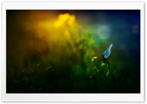 Beautiful Blue Butterfly HD Wide Wallpaper for Widescreen