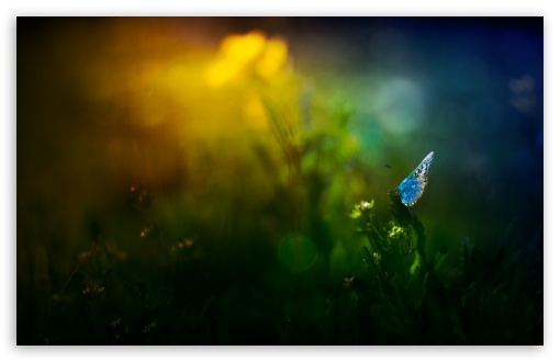 Beautiful Blue Butterfly ❤ 4K UHD Wallpaper for Wide 16:10 5:3 Widescreen WHXGA WQXGA WUXGA WXGA WGA ; 4K UHD 16:9 Ultra High Definition 2160p 1440p 1080p 900p 720p ; Standard 4:3 5:4 3:2 Fullscreen UXGA XGA SVGA QSXGA SXGA DVGA HVGA HQVGA ( Apple PowerBook G4 iPhone 4 3G 3GS iPod Touch ) ; Smartphone 5:3 WGA ; Tablet 1:1 ; iPad 1/2/Mini ; Mobile 4:3 5:3 3:2 16:9 5:4 - UXGA XGA SVGA WGA DVGA HVGA HQVGA ( Apple PowerBook G4 iPhone 4 3G 3GS iPod Touch ) 2160p 1440p 1080p 900p 720p QSXGA SXGA ;