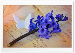 Beautiful Blue Hyacinth HD Wide Wallpaper for Widescreen