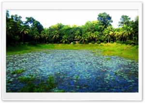 Beautiful Botanical Garden, Bangladesh Ultra HD Wallpaper for 4K UHD Widescreen desktop, tablet & smartphone