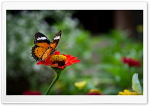 Beautiful Butterfly On Flower HD Wide Wallpaper for 4K UHD Widescreen desktop & smartphone