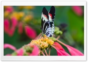 Beautiful Butterfly On Flower   Macro HD Wide Wallpaper for Widescreen