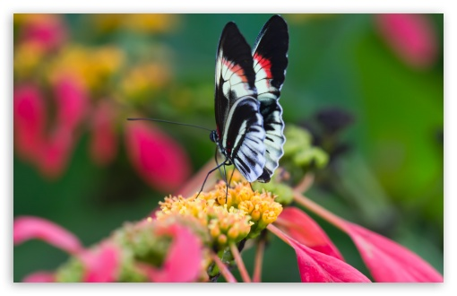 Beautiful Butterfly On Flower   Macro ❤ 4K UHD Wallpaper for Wide 16:10 5:3 Widescreen WHXGA WQXGA WUXGA WXGA WGA ; 4K UHD 16:9 Ultra High Definition 2160p 1440p 1080p 900p 720p ; UHD 16:9 2160p 1440p 1080p 900p 720p ; Standard 4:3 5:4 3:2 Fullscreen UXGA XGA SVGA QSXGA SXGA DVGA HVGA HQVGA ( Apple PowerBook G4 iPhone 4 3G 3GS iPod Touch ) ; Smartphone 5:3 WGA ; Tablet 1:1 ; iPad 1/2/Mini ; Mobile 4:3 5:3 3:2 16:9 5:4 - UXGA XGA SVGA WGA DVGA HVGA HQVGA ( Apple PowerBook G4 iPhone 4 3G 3GS iPod Touch ) 2160p 1440p 1080p 900p 720p QSXGA SXGA ; Dual 4:3 5:4 UXGA XGA SVGA QSXGA SXGA ;