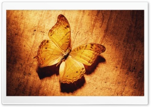 Beautiful Butterfly On Wood HD Wide Wallpaper for Widescreen