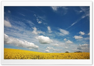 Beautiful Canola Field, Summer HD Wide Wallpaper for Widescreen