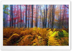 Beautiful Colored Trees HD Wide Wallpaper for Widescreen