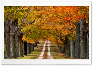 Beautiful Country Road HD Wide Wallpaper for Widescreen