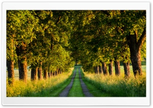 Beautiful Country Road, Tree Tunnel Ultra HD Wallpaper for 4K UHD Widescreen desktop, tablet & smartphone