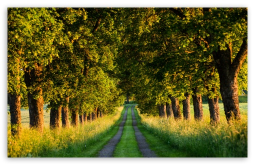 Beautiful Country Road, Tree Tunnel UltraHD Wallpaper for Wide 16:10 5:3 Widescreen WHXGA WQXGA WUXGA WXGA WGA ; UltraWide 21:9 24:10 ; 8K UHD TV 16:9 Ultra High Definition 2160p 1440p 1080p 900p 720p ; UHD 16:9 2160p 1440p 1080p 900p 720p ; Standard 4:3 5:4 3:2 Fullscreen UXGA XGA SVGA QSXGA SXGA DVGA HVGA HQVGA ( Apple PowerBook G4 iPhone 4 3G 3GS iPod Touch ) ; Smartphone 16:9 3:2 5:3 2160p 1440p 1080p 900p 720p DVGA HVGA HQVGA ( Apple PowerBook G4 iPhone 4 3G 3GS iPod Touch ) WGA ; Tablet 1:1 ; iPad 1/2/Mini ; Mobile 4:3 5:3 3:2 16:9 5:4 - UXGA XGA SVGA WGA DVGA HVGA HQVGA ( Apple PowerBook G4 iPhone 4 3G 3GS iPod Touch ) 2160p 1440p 1080p 900p 720p QSXGA SXGA ;