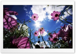 Beautiful Day HD Wide Wallpaper for Widescreen