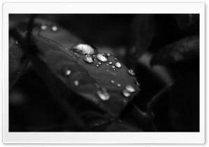Beautiful Drops Of Water On The Leaf HD Wide Wallpaper for Widescreen