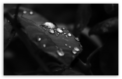 Beautiful Drops Of Water On The Leaf HD wallpaper for Wide 16:10 5:3 Widescreen WHXGA WQXGA WUXGA WXGA WGA ; HD 16:9 High Definition WQHD QWXGA 1080p 900p 720p QHD nHD ; Standard 4:3 5:4 3:2 Fullscreen UXGA XGA SVGA QSXGA SXGA DVGA HVGA HQVGA devices ( Apple PowerBook G4 iPhone 4 3G 3GS iPod Touch ) ; Tablet 1:1 ; iPad 1/2/Mini ; Mobile 4:3 5:3 3:2 16:9 5:4 - UXGA XGA SVGA WGA DVGA HVGA HQVGA devices ( Apple PowerBook G4 iPhone 4 3G 3GS iPod Touch ) WQHD QWXGA 1080p 900p 720p QHD nHD QSXGA SXGA ; Dual 5:4 QSXGA SXGA ;