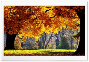 Beautiful Fall HD Wide Wallpaper for Widescreen