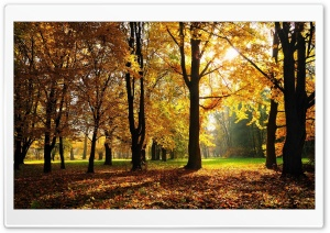 Beautiful Fall Trees HD Wide Wallpaper for Widescreen