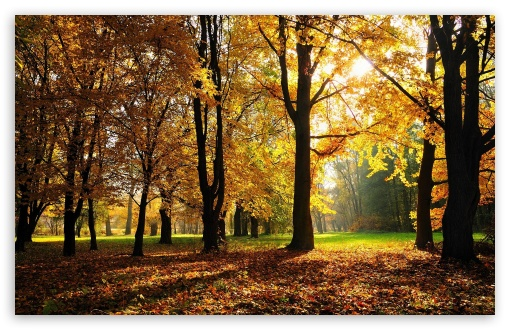Beautiful Fall Trees HD wallpaper for Wide 16:10 5:3 Widescreen WHXGA WQXGA WUXGA WXGA WGA ; HD 16:9 High Definition WQHD QWXGA 1080p 900p 720p QHD nHD ; Standard 4:3 5:4 3:2 Fullscreen UXGA XGA SVGA QSXGA SXGA DVGA HVGA HQVGA devices ( Apple PowerBook G4 iPhone 4 3G 3GS iPod Touch ) ; Tablet 1:1 ; iPad 1/2/Mini ; Mobile 4:3 5:3 3:2 16:9 5:4 - UXGA XGA SVGA WGA DVGA HVGA HQVGA devices ( Apple PowerBook G4 iPhone 4 3G 3GS iPod Touch ) WQHD QWXGA 1080p 900p 720p QHD nHD QSXGA SXGA ;