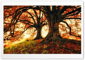 Beautiful Fall Trees Background HD Wide Wallpaper for 4K UHD Widescreen desktop & smartphone