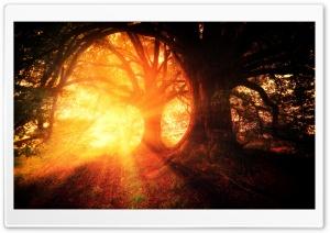 Beautiful Fall Trees, Sun Rays Ultra HD Wallpaper for 4K UHD Widescreen desktop, tablet & smartphone