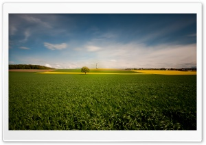 Beautiful Field HD Wide Wallpaper for Widescreen