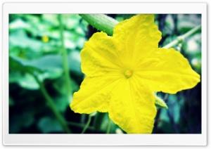 Beautiful Flower HD Wide Wallpaper for 4K UHD Widescreen desktop & smartphone
