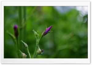 Beautiful Flower HD Wide Wallpaper for Widescreen
